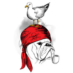 The image portrait of the dog Bulldog wearing a pirate's bandana and of the seagull. Vector illustration.
