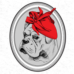 The picture in the frame with image of the dog Bulldog in the Women's hat. Vector illustration.