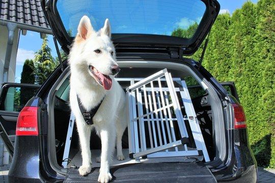 Hund  Autobox