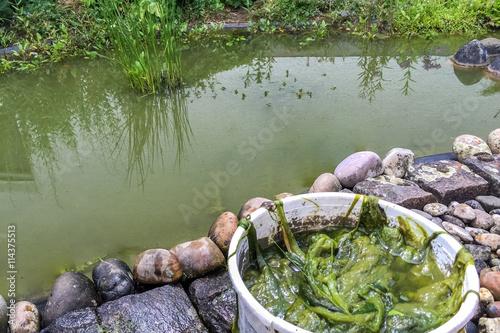 Algen teich reinigen entfernen stockfotos und for Algen entfernen