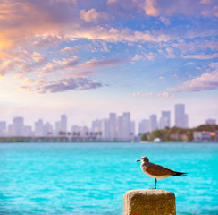 Wall Mural - Miami downtown foggy skyline Miami Beach