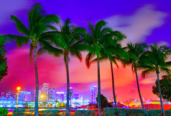Wall Mural - Miami skyline sunset with palm trees Florida