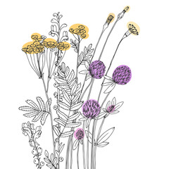 Fototapeta Vector sketch of the wildflowers