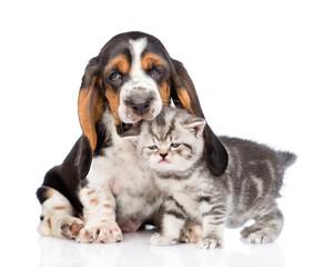 basset hound puppy biting tiny kitten. isolated on white background