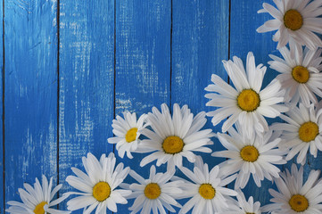 White chamomile flowers on the wooden background