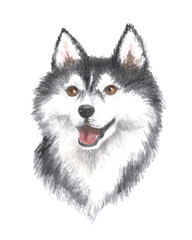 Siberian husky. Image of a big thoroughbred dog. Watercolor painting.