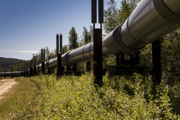 Trans-Alaska oil pipeline in the summer.
