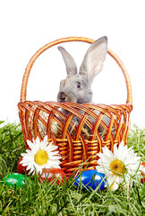 Little gray rabbit sitting in Easter basket