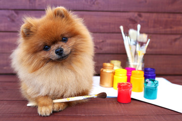 Dog artist. Beautiful pomeranian dog with paints and brushed on wooden background. Clever spitz