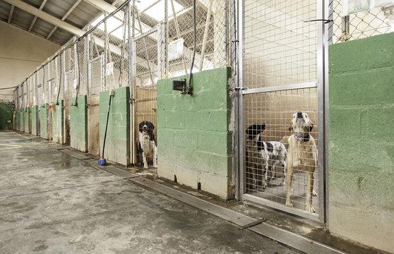 Sad dog cages