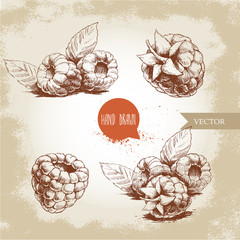 Hand drawn raspberry set isolated on vintage background. Retro sketch style vector eco food illustration