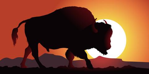 Bison - Amérique