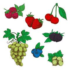 Fragrant fresh fruits and berries sketch symbols