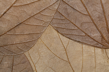 Texture of dried leaves close-up. Background