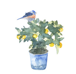 the tree Mandarin/tangerine tree in the pot with bird, watercolor