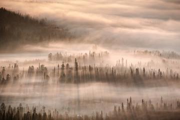 Forest in mist, Finland
