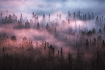 Forest covered in mist, Finland