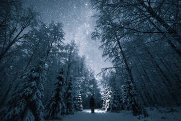 Forest in snow, Finland