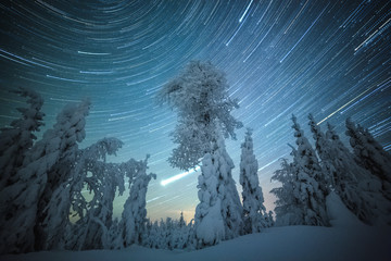 Meteor shower with snow covered trees, Lapland