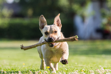 Cute dog playing with a stick