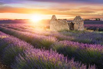 Printed kitchen splashbacks Eggplant Lavender in Provence at sunset