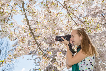 Woman young girl photographer taking shot of cherry tree blossom camera