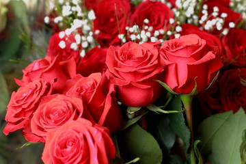 Red roses./Red roses close up. Background.