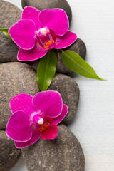 Wall Mural - Orchid.