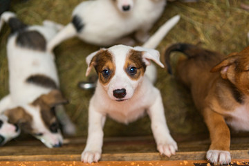 Little puppies in the shelter