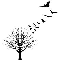 контурный вектор силуэт дерево и птицы татуировка