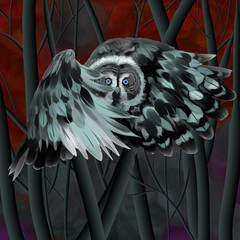 owl, bird, forest, night, drawing