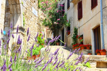 Old street with flowers in Motovun village in Istria, Croatia