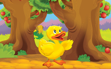 Cartoon farm scene with animal - young duck -  illustration for children