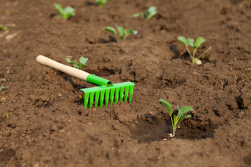 Gardening Tools. Rake on the earth with sprouts cabbage