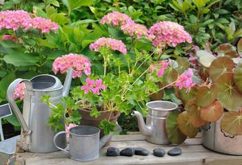 pots de fleurs et arrosoirs métalliques devant hortensia
