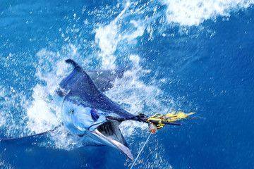 Spoed Fotobehang Vissen Blue marlin on the hook