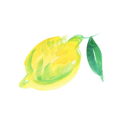watercolor lemon illustration on  white background