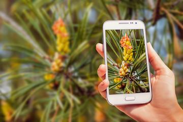 Phone in hand. Macro photography