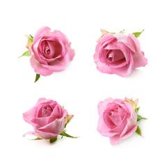 Single pink rose bud isolated