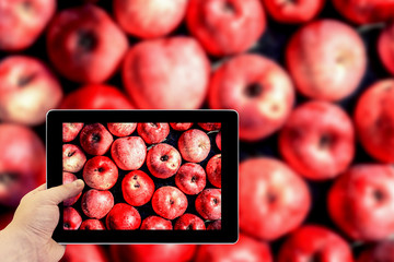 Tablet photography concept. Taking pictures on a tablet. Vivid freshly picked red apples close up background