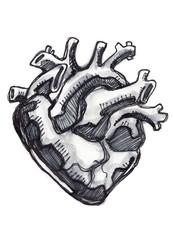 Human heart ink drawing