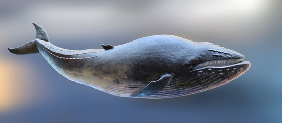 Whale model