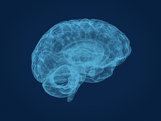 Wire frame model of the human brain. 3d rendering.