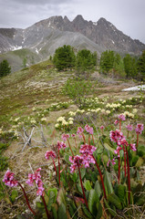 flowers on a background of mountains