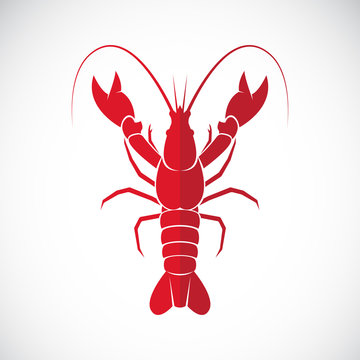 Vector of an lobster design on white background., Lobster.
