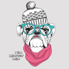 Image Portrait bulldog in the hat, in the cravat and with glasses. Vector illustration.