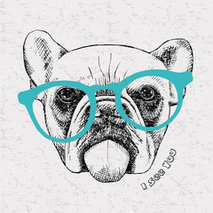 Image portrait bulldog with glasses. Vector illustration.