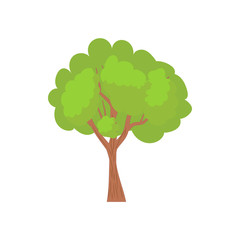 Green tree with a rounded crown icon