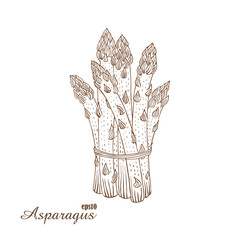 Asparagus. Vector illustration in woodcut style. Hand-draw sketch.