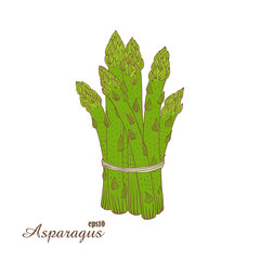 Asparagus. Color vector illustration in woodcut style. Hand-draw sketch.